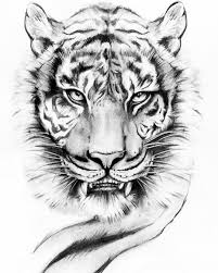tiger drawing tattoo. Interesting Tattoo Viviana Ceesira Troiano On Instagram U201c Art Draw Drawing Tattooart  Tattooartist Tattooed Ink Inked Tattoos Lion Tiger Tigertattoo Realism  And Tiger Drawing Tattoo B