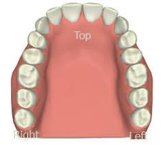 Tooth Meridian Chart Interactive Tooth Meridian Chart Tara Kaur Dds 952 956 6700