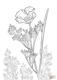 California Poppy Coloring Page From Poppies