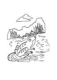 Small Picture Coloring Pages Animal Frog On A Lily Pad www