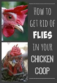 how to rid your chicken coop of flies imaginacres