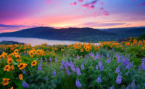 nature backgrounds hd. Wonderful Nature Windows Nature Backgrounds To Nature Backgrounds Hd