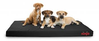 6 Indestructible Dog Beds for Chew tastic Dogs