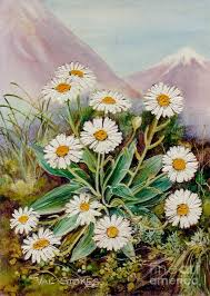 mountains painting nz mountain daisy by val stokes