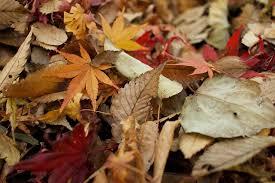 Resultado de imagen de imágenes de hojas otoño