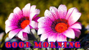 good morning flowers photo wallpaper pictures free hd