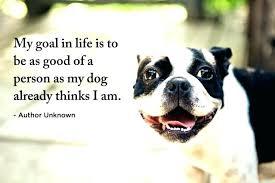 Dog Quotes Inspirational Beauteous Dog Quotes Inspirational Also 48 To Frame Astounding Inspirational