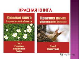 красной книги россии фото и описание цветы красной книги россии фото и описание