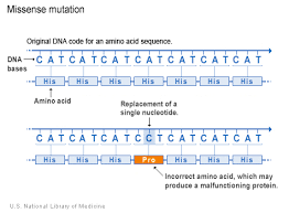 What Kinds Of Gene Mutations Are Possible Genetics Home