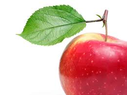 meditations on an apple org