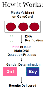 dna blood test during pregnancy