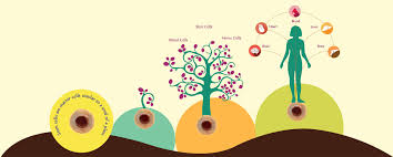 benefits of stem cell research essay related post of benefits of stem cell research essay