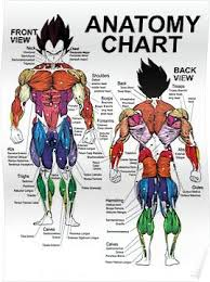 Anatomy Chart Muscle Diagram Exercise Science Poster