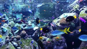 Fish Tank 3 Hours Of Beautiful Coral Reef Fish Relaxing Ocean Fish