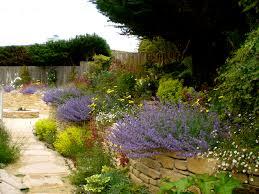 drought resistant garden. Drought Tolerant Garden Design Unique Outdoor Wonderful Landscaping With Resistant T