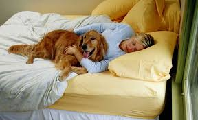 New In The Bedroom New Year New Rules How To Set Pet Boundaries In The Bedroom The