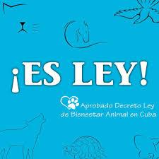 """❤️🇨🇺Victoria de Armas on Twitter: """"Hoy quedó aprobado el Decreto Ley de  bienestar animal en #Cuba 👏👏👏 🐕🐈🐎🕊️🐢🐠 #EsteEsMiHimno @DeZurdaTeam…  """""""