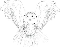 Owl Coloring Pages For Kids Special Offer Coloring Picture Of Owls