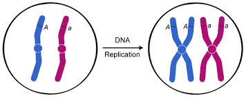 Dna Replication Definition Life Sciences Cyberbridge