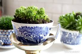 Growing plants and herbs is one of the best kinds of hobbies present, and  also it is useful too, especially if it is indoor gardening.