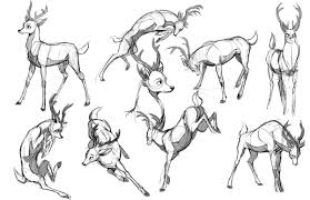 Some Stylized Deer Poses Exploration Drawing Animals In 2019