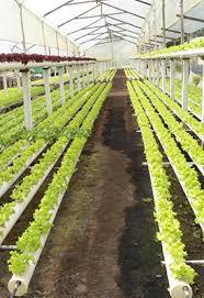 Resultado de imagen para seguro agropecuario es el principal instrumento de garantía