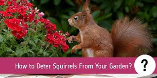 how to deter squirrels from your garden