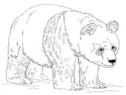 Giant Panda Bear Coloring Page Free Printable Coloring Pages