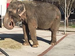 an elephant outside of the garden bros circus
