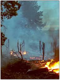 Что делать при лесном пожаре Поведение при лесном пожаре  Что делать при лесном пожаре