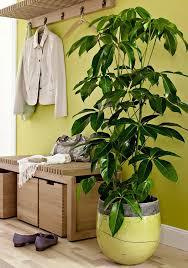Lampade per piante da interno. 18 Piante D Appartamento Che Non Richiedono Manutenzione Guida Giardino