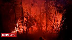 Indonesia <b>haze</b>: Why do forests keep burning? - BBC News
