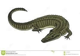 Green <b>Crocodile</b>, American <b>Alligator</b> Reptile Amphibian. Tropical ...