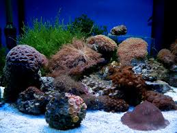 Salt Water Tank Wallpaper Free Hd Backgrounds Images Pictures