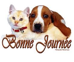 """Résultat de recherche d'images pour """"gif chat chien"""""""