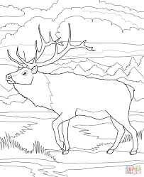 Small Picture Caribou Deer coloring page Free Printable Coloring Pages