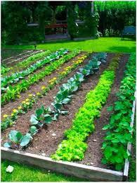 Small Picture Backyards Charming Backyard Vegetable Garden Design Ideas Fresh
