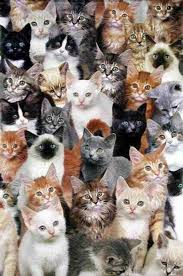 Over the years, Mom rescued <b>a lot</b> of <b>cats</b>. They became our ...