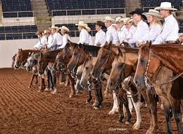 Brazos County Expo Will Host State 4 H Horse Show For Next Five