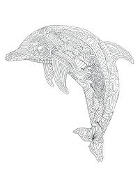 Coloring Page Dolphin Dolphin Colouring Page The Best Coloring
