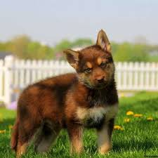 mix puppies for