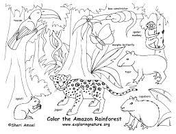 printable rainforest coloring pages color pictures coloring page animals coloring pages free printable coloring