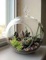 3pcs set diy hanging planter vase with air plant kits glass globe succulent terrariums garden bonsai garden decor in bonsai from home garden on
