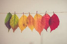 Image result for where is fall?