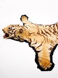 tiger skin rug with taxidermy head