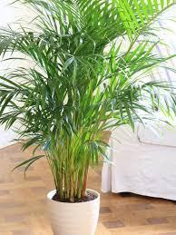 Best 25+ Low light plants ideas on Pinterest | Indoor plants low light,  Indoor house plants and Indoor garden and lighting