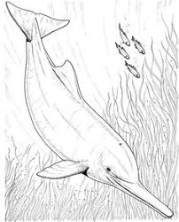 Small Picture Two Dolphin Line Drawings Sea Pinterest Coloring books