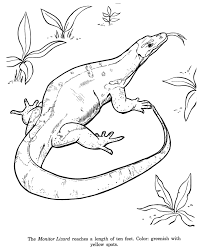 Small Picture Animal Drawings Coloring Pages Monitor Lizard animal