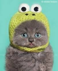 cute kittens in costumes. Plain Kittens Itu0027s Adorable But Then You Look At The Kittenu0027s Expression UTTER TERROR  I Think It Would Be Best To Remove Terrifying Frogalien Hat With Cute Kittens In Costumes I