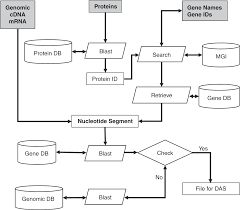 Dhhs Organisational Chart Governance Of Biomedical Research Commons To Advance